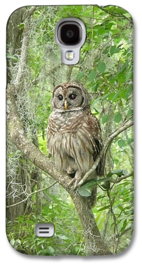 Nature Galaxy S4 Case featuring the photograph Barred Owl I by Kathy Schumann