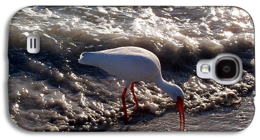 Beach Galaxy S4 Case featuring the photograph Beach Bird by Elizabeth Klecker