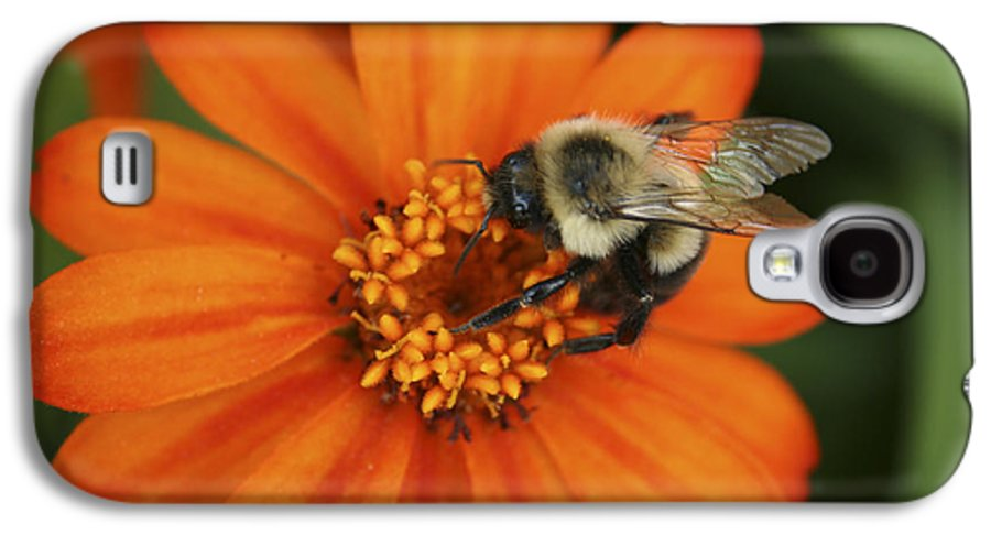 Bee Galaxy S4 Case featuring the photograph Bee On Aster by Margie Wildblood