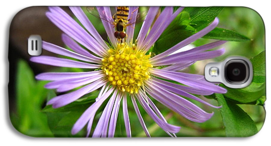 Bee Galaxy S4 Case featuring the photograph Bee On Wildflower by Melissa Parks