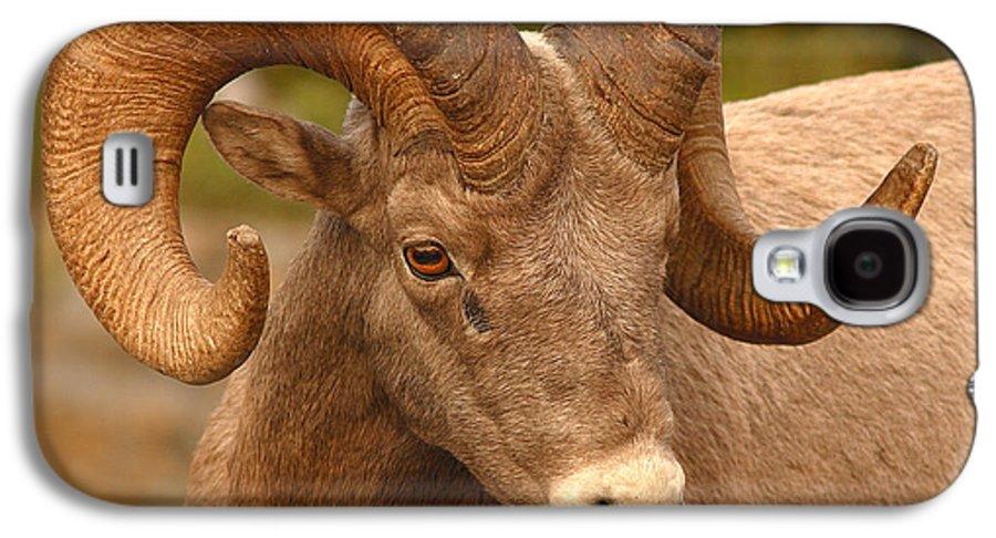 Bighorn Galaxy S4 Case featuring the photograph Bighorn Ram With Evident Disdain by Max Allen