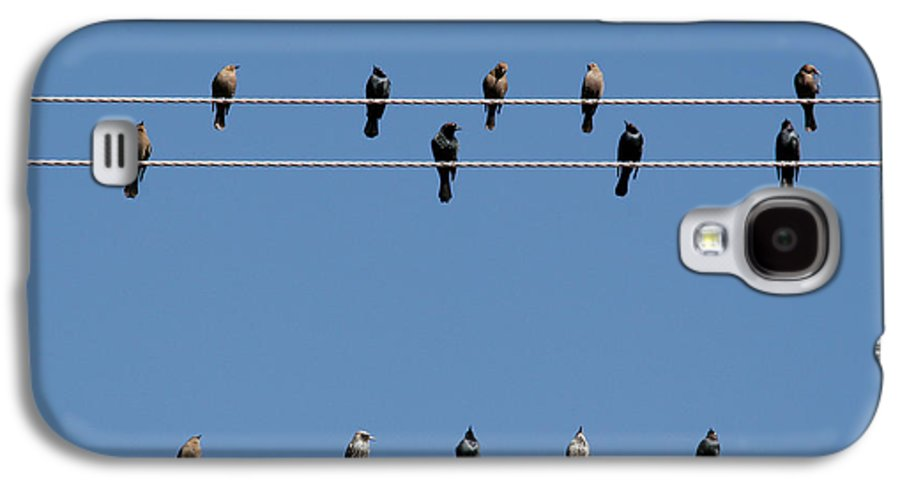 Birds Galaxy S4 Case featuring the photograph Bird On A Wire by Christine Till