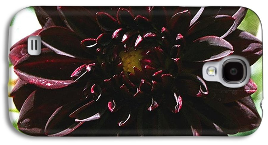 Flower Galaxy S4 Case featuring the photograph Black Dalia by Dean Triolo