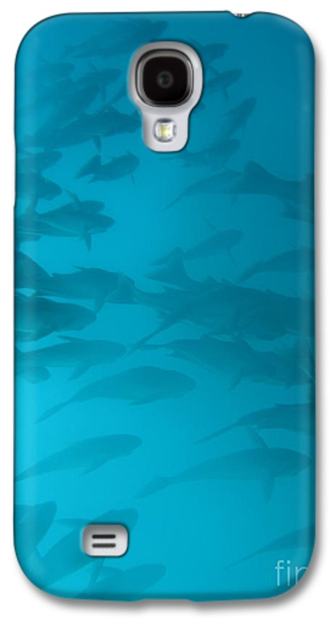 Underwater Galaxy S4 Case featuring the photograph Blue Flash by Chad Natti