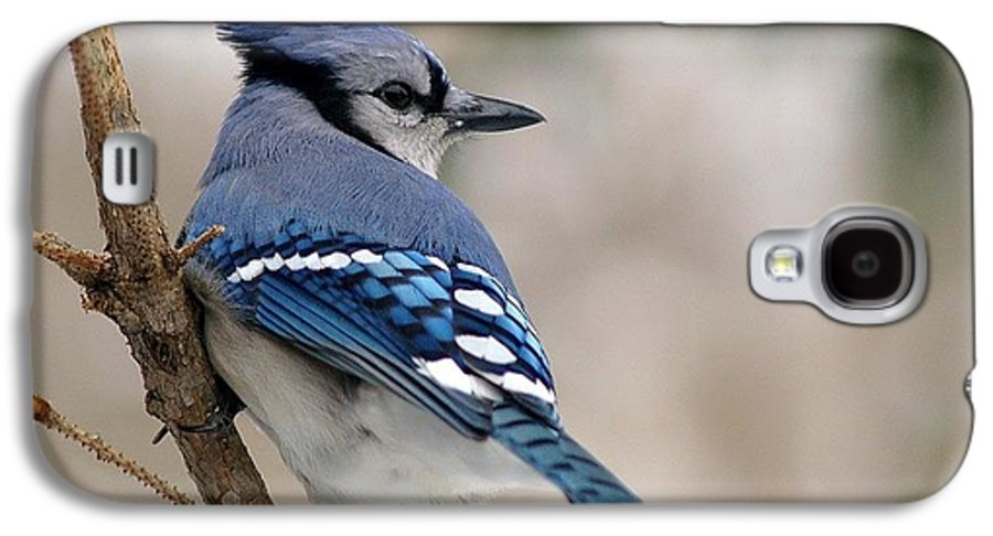 Blue Jay Galaxy S4 Case featuring the photograph Blue Jay by Gaby Swanson