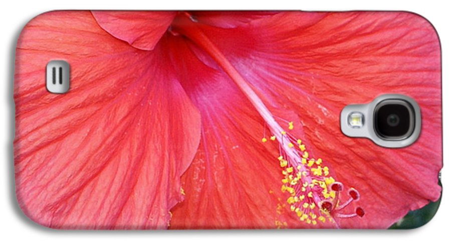Flowers Galaxy S4 Case featuring the photograph Blushing Stamen by Debbie May
