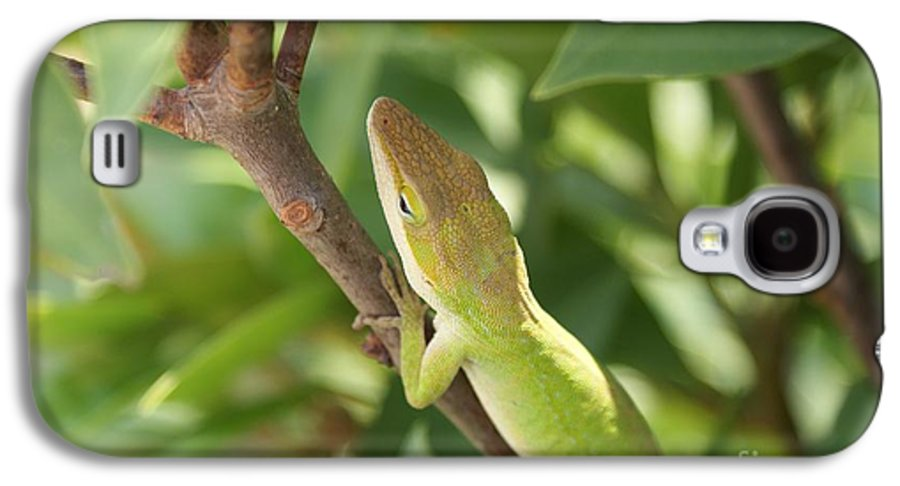 Lizard Galaxy S4 Case featuring the photograph Blusing Lizard by Shelley Jones