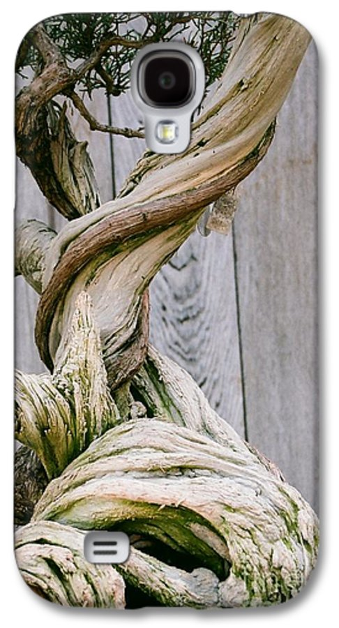 Tree Galaxy S4 Case featuring the photograph Bonsai by Dean Triolo