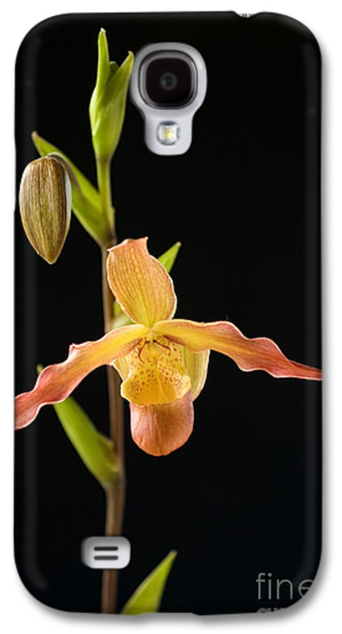 Black Galaxy S4 Case featuring the photograph Bright Orchid by Ron Dahlquist - Printscapes