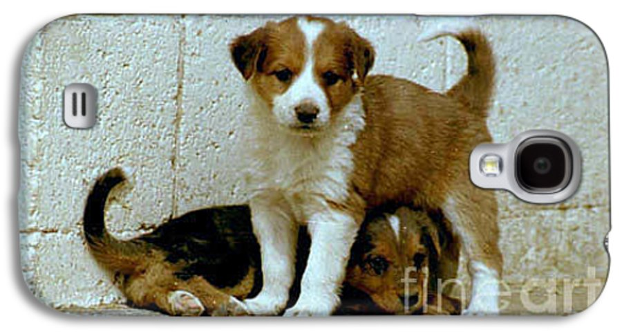 Puppies Galaxy S4 Case featuring the photograph Brothers by Kathy McClure