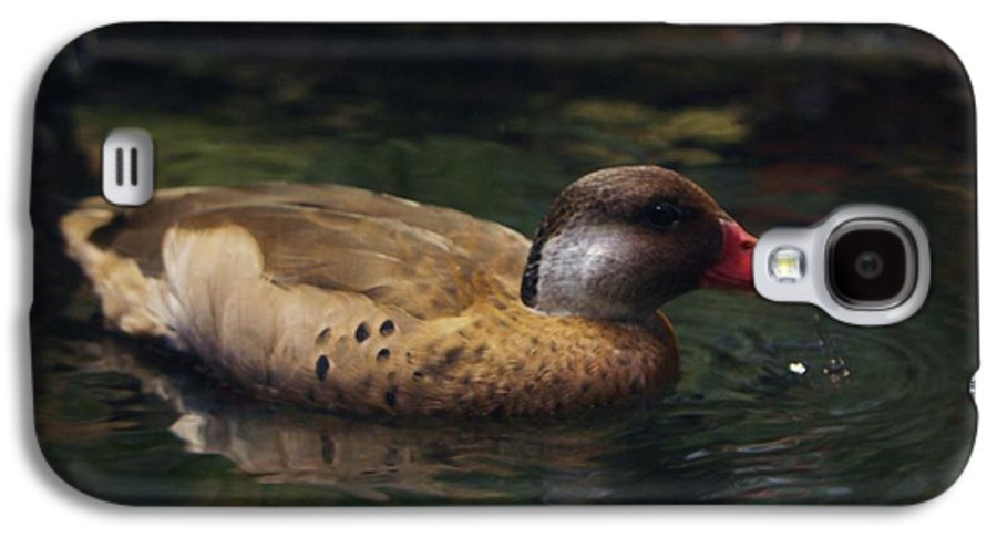 Duck Galaxy S4 Case featuring the photograph Brown Duck by Kenna Westerman