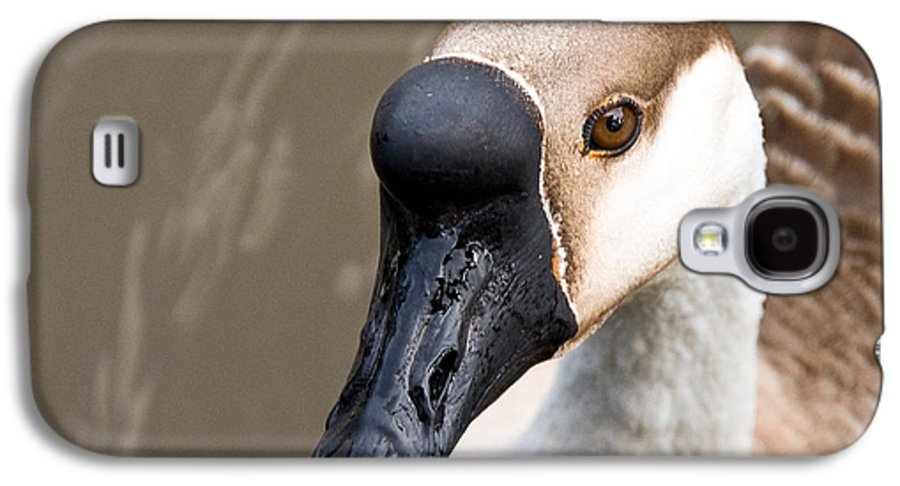 Chinese Brown Goose Galaxy S4 Case featuring the photograph Brown Eye by Christopher Holmes