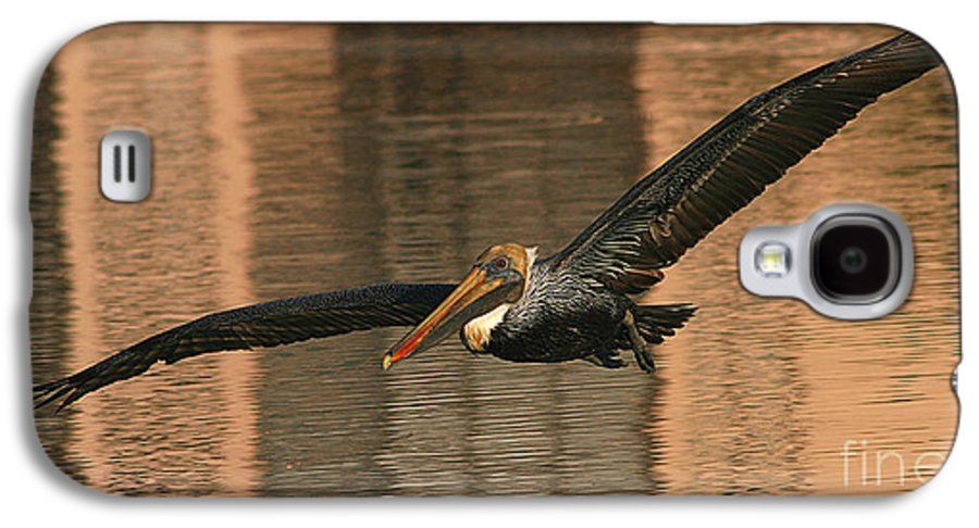 Pelican Galaxy S4 Case featuring the photograph Brown Pelican On A Sunset Flyby by Max Allen