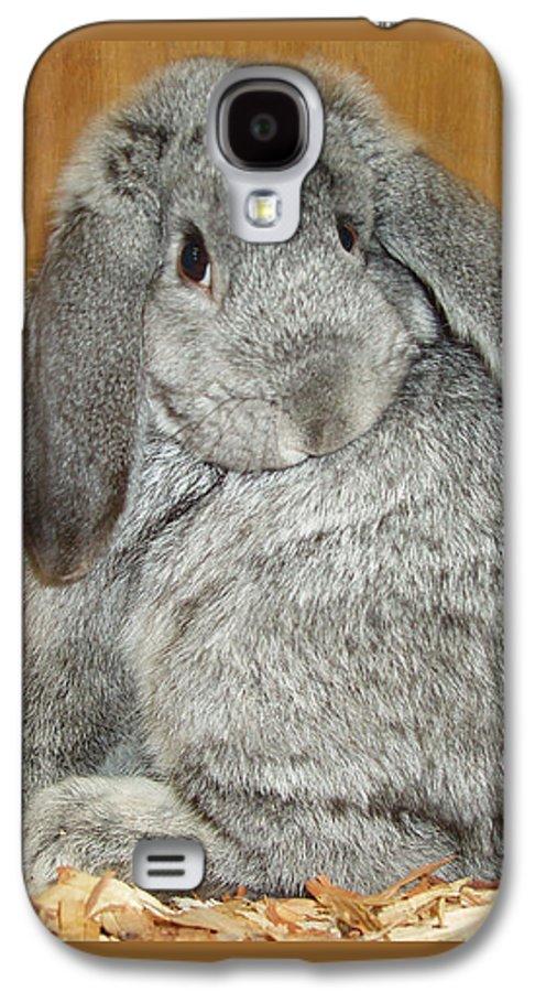 Bunny Galaxy S4 Case featuring the photograph Bunny by Gina De Gorna