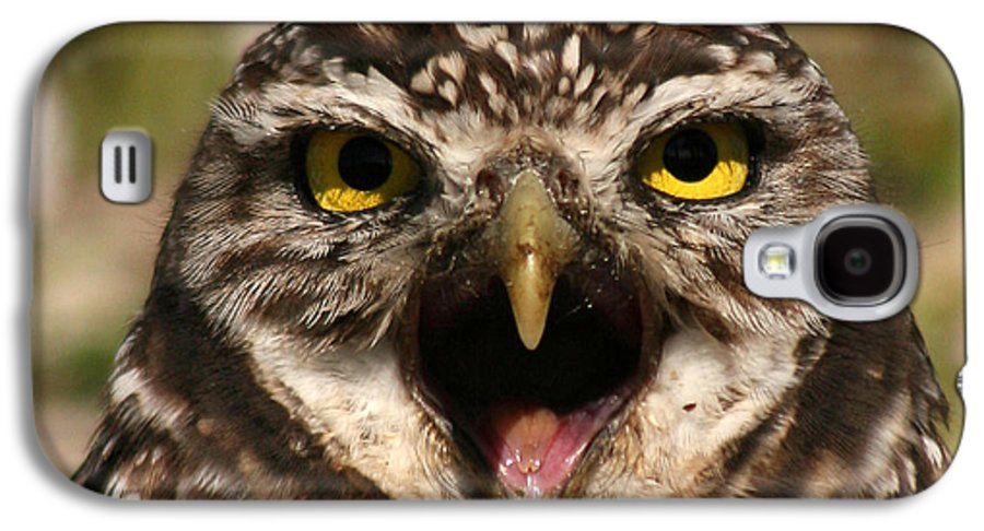 Owl Galaxy S4 Case featuring the photograph Burrowing Owl Eye To Eye by Max Allen