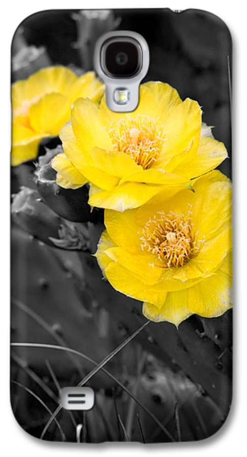 Cactus Galaxy S4 Case featuring the photograph Cactus Blossom by Christopher Holmes