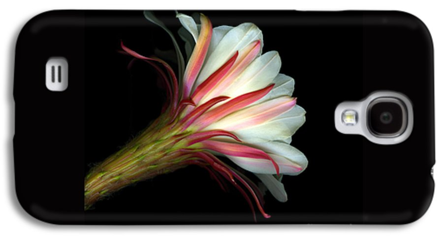 Scanart Galaxy S4 Case featuring the photograph Cactus Flower by Christian Slanec