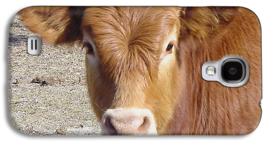 Farm Galaxy S4 Case featuring the painting Calf Smiles by Debbie May