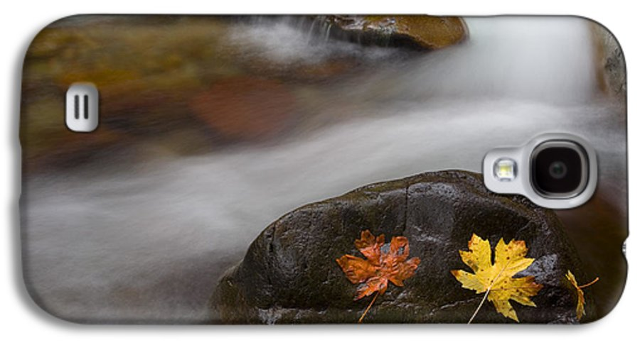 Leaves Galaxy S4 Case featuring the photograph Castaways by Mike Dawson