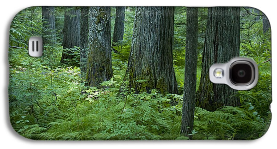 Grove Galaxy S4 Case featuring the photograph Cedar Grove by Idaho Scenic Images Linda Lantzy