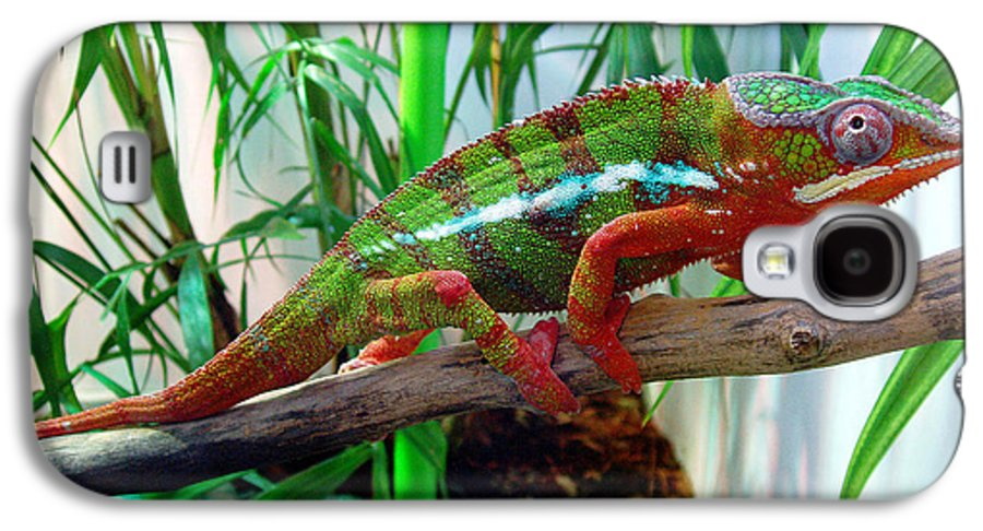 Chameleon Galaxy S4 Case featuring the photograph Colorful Chameleon by Nancy Mueller