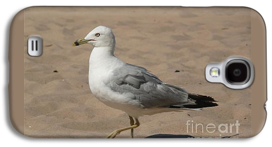 Bird Galaxy S4 Case featuring the photograph Come On Take The Picture Already by Barb Montanye Meseroll