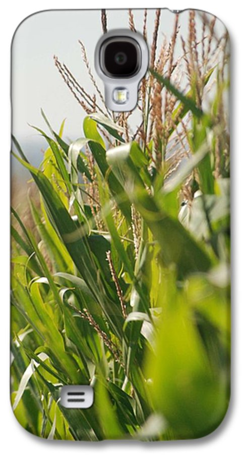 Corn Galaxy S4 Case featuring the photograph Corn Country by Margaret Fortunato