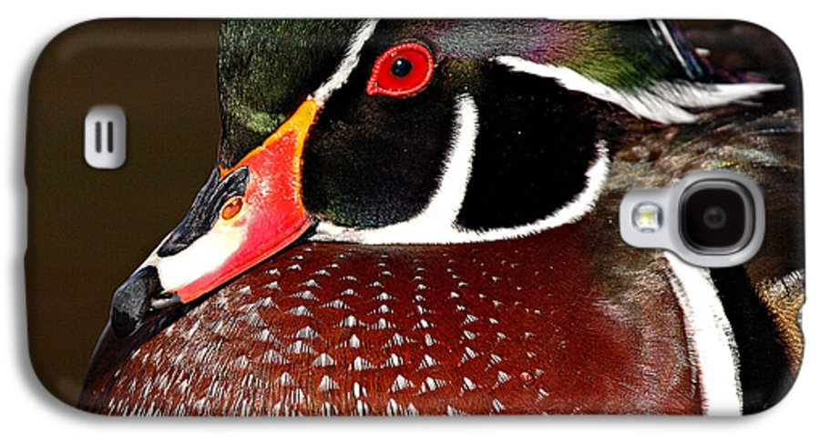 Duck Galaxy S4 Case featuring the photograph Courtship Colors Of A Wood Duck Drake by Max Allen