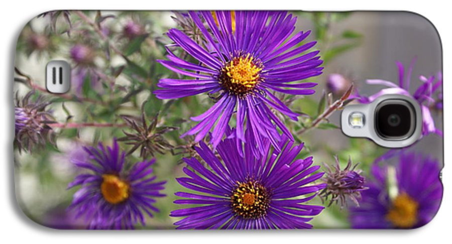 Daisey Galaxy S4 Case featuring the painting Daisey May by Debbie May