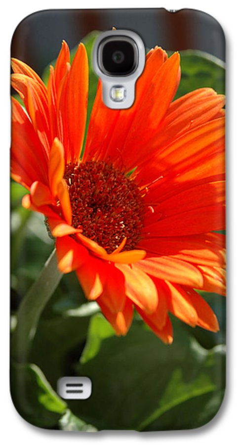 Daisy Galaxy S4 Case featuring the photograph Daisy by Kathy Schumann