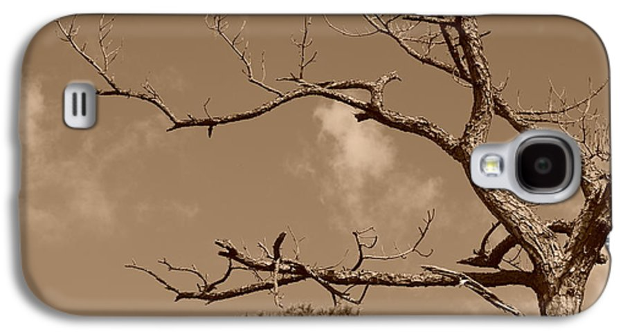 Sepia Galaxy S4 Case featuring the photograph Dead Wood by Rob Hans