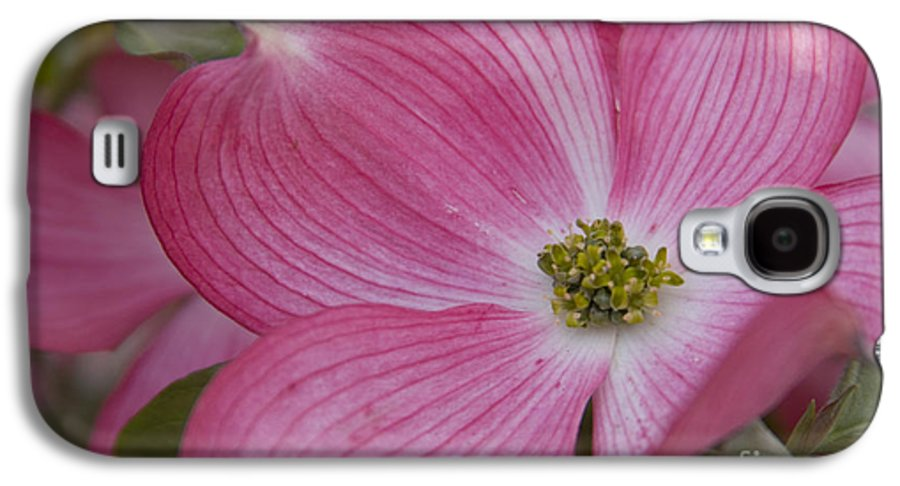 Dogwood Galaxy S4 Case featuring the photograph Dogwood Bloom by Idaho Scenic Images Linda Lantzy