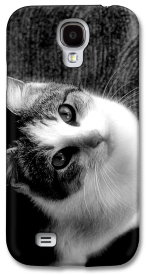 Cat Galaxy S4 Case featuring the photograph Don't Ever Leave by Gaby Swanson