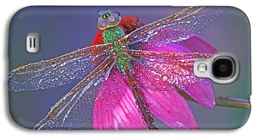 Dew Covered Dragonfly Rests On Purple Cone Flower Galaxy S4 Case featuring the photograph Dreaming Dragon by Bill Morgenstern