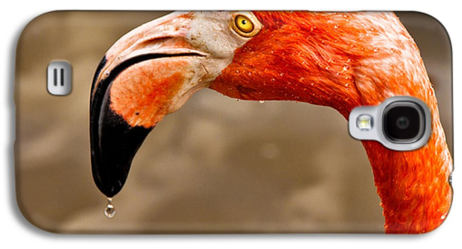 Flamingo Galaxy S4 Case featuring the photograph Dripping Flamingo by Christopher Holmes