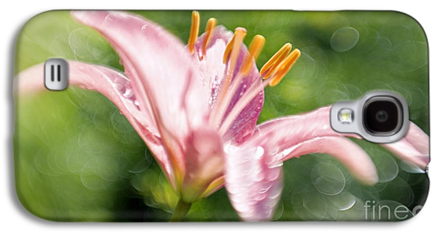 Easter Lily Lilium Lily Flowers Flower Floral Bloom Blossom Blooming Garden Nature Plant Petals Plants Grow Species Garden One Single 1 Petals Close-up Close Up Cultivate Botanical Botany Nature Galaxy S4 Case featuring the photograph Easter Lily 1 by Tony Cordoza