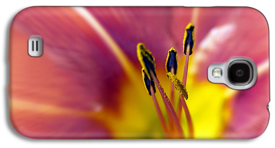 Easter Lily Lilium Lily Flowers Flower Floral Bloom Blossom Blooming Garden Nature Plant Petals Plants Grow Species Garden One Single 1 Petals Close-up Close Up Cultivate Botanical Botany Nature Galaxy S4 Case featuring the photograph Easter Lily 3 by Tony Cordoza