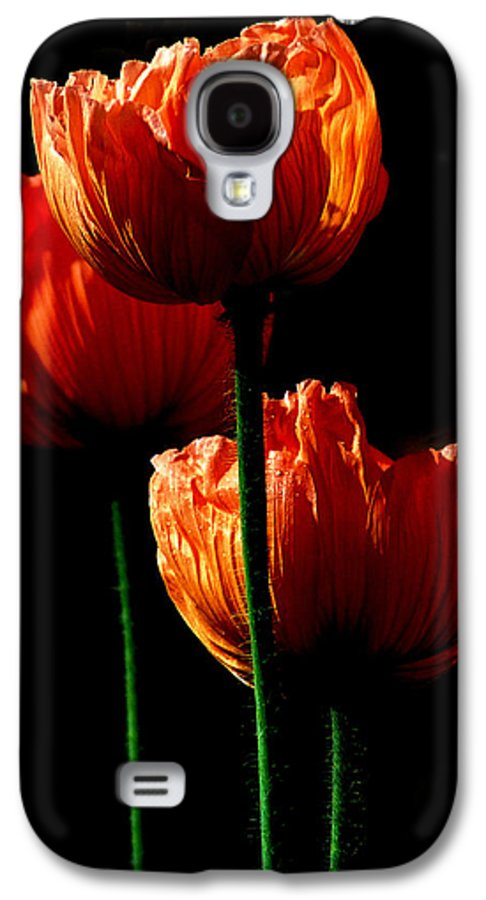 Photograph Galaxy S4 Case featuring the photograph Elegance by Stephie Butler