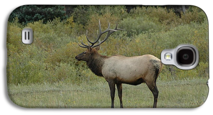 Elk Galaxy S4 Case featuring the photograph Elk by Kathy Schumann
