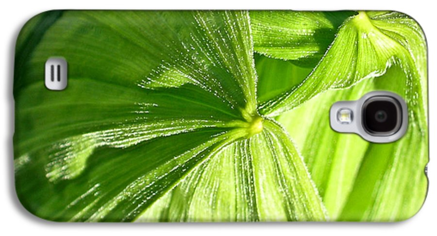 Plant Galaxy S4 Case featuring the photograph Emerging Plants by Douglas Barnett