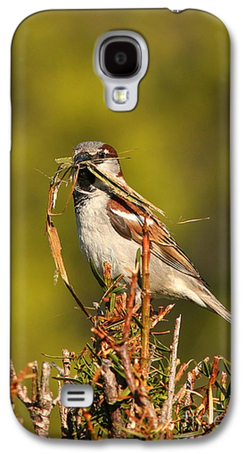 Sparrow Galaxy S4 Case featuring the photograph English Sparrow Bringing Material To Build Nest by Max Allen