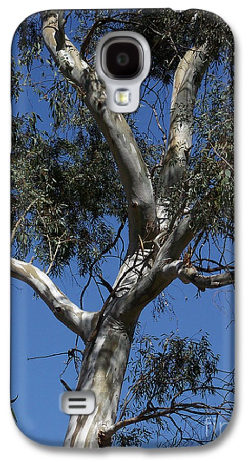 Trees Galaxy S4 Case featuring the photograph Eucalyptus by Kathy McClure