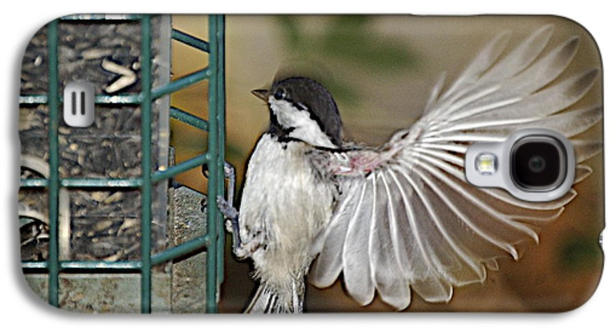 Chickadee In Flight Galaxy S4 Case featuring the photograph Fan Dance by Faith Harron Boudreau