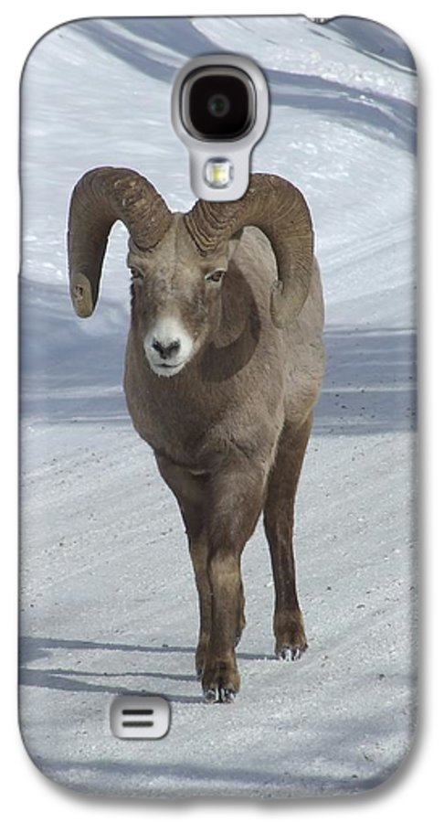 Bighorn Sheep Galaxy S4 Case featuring the photograph Farewell To The King by Tiffany Vest