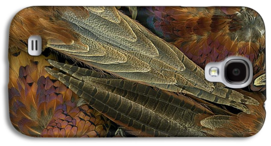 Pheasant Galaxy S4 Case featuring the photograph Featherdance by Christian Slanec