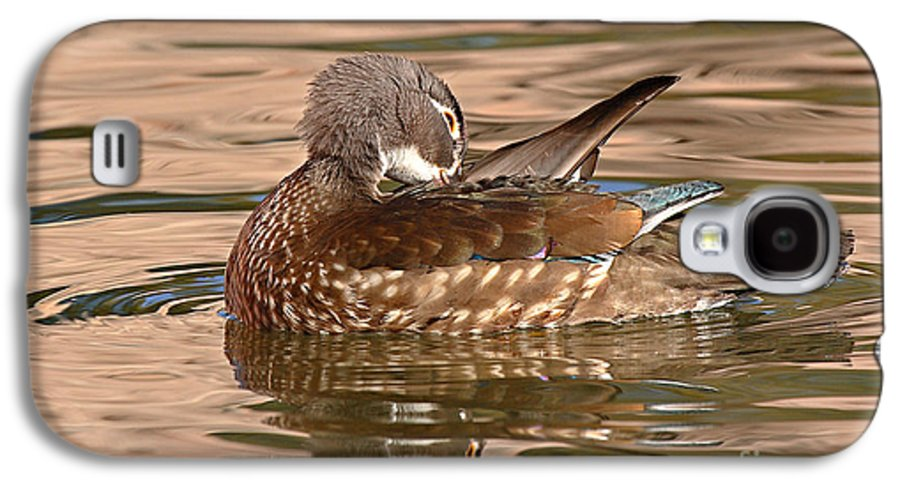 Wood Duck Galaxy S4 Case featuring the photograph Female Wood Duck Preening On The Water by Max Allen