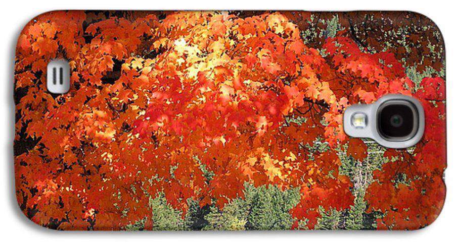 Autumn Photographs Galaxy S4 Case featuring the photograph Flickering Sunlight by Louise Magno