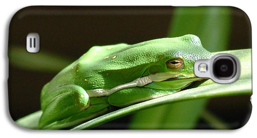 Frog Galaxy S4 Case featuring the photograph Florida Tree Frog by Ned Stacey