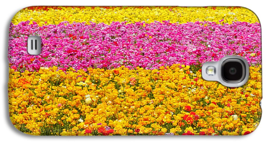Flower Galaxy S4 Case featuring the photograph Flower Fields Carlsbad Ca Giant Ranunculus by Christine Till