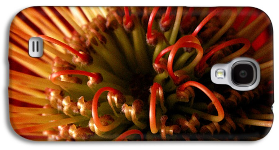 Flowers Galaxy S4 Case featuring the photograph Flower Hawaiian Protea by Nancy Griswold